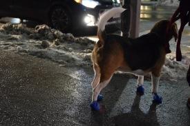 Dogs wear shoes here..I love it!